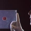 4,5 milliárdot ér a világ legrégebbi bélyege