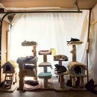 Egy macskamenhely, ahol rengeteg macska életet mentettek  meg