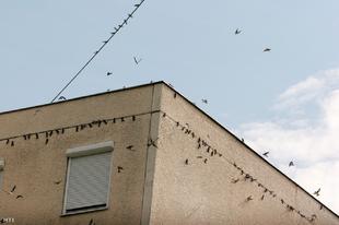 Eresz alól fecskefészket leverők, figyelem : Áprilistól kemény büntetés jár érte Győrben is