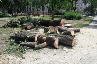 ELKÉPESZTŐ VANDALIZMUS BORKAIÉKTÓL GYŐRBEN: Kivágták a Malom-liget közel 40 egészséges fáját!