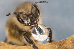 A TÖRTÉNELEMBEN ELŐSZÖR! AMIN AZ ÉLETÜNK MÚLIK! Ma ünnepeljük a méhek világnapját!