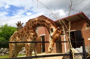Állatkertek 1. Maubeuge, avagy állatkert a város közepén