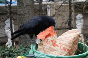 """Hess madár! - avagy """"szemétügyek"""" Belgiumban"""