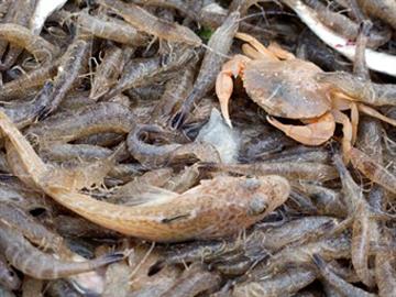 shrimp-fishermen-4_tcm13-11996.jpg