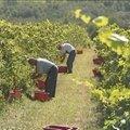 Változik a bortörvény