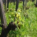 A magyar bor a világ csúcsgasztronómiájában