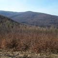 2012. március 4. Királyrét - Csóványos - Musli vadászház - Nyír-rét - Bárány-bérc - Vörös-kő - Diósjenő