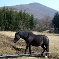 2011. március 12. Ipolytölgyes - Gömbölyű-kő - Nagyirtáspuszta - Kopasz-hegy - Kóspallag - Csurgópuszta - Zebegény