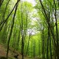 2011. április 24. A Magas-Börzsöny vadregényes völgyeiben