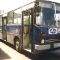 A 277-es (24Y, 77-es) busz, vagyis a