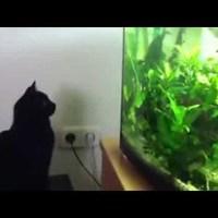 Negró cica, a napi cuki