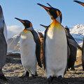 Karácsonyozz a pingvinekkel az Antarktiszon!