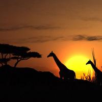 Egzotikus szafari egymillió dollárért