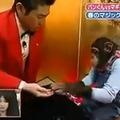 Az év japán videója: Bűvészkedj majomnak!