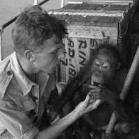 Attenborough első kalandjai természettudósként az '50-es években