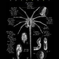 Az Alien: Covenant védelmében - a regényváltozat számos részletet helyre tesz