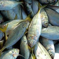 A mohó halászok és a tenger