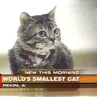 Rekorder macskák