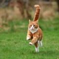 Mit eszik a macska? – 1. rész