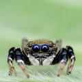 Félsz a pókoktól? Nézz szembe velük!