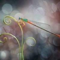 Makrófotók rovarokról - Egy gyönyörű parányi világ
