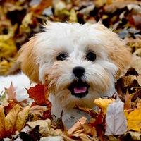 Az 5 legfurcsább kutyaszokás