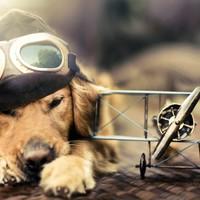 Milyen szabályokat kell betartani, ha kutyával utazunk?