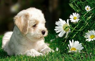 7 tipp, hogyan előzd meg, hogy a kutya megegye a virágaidat