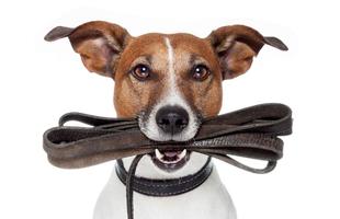 Hogyan válassz nyakörvet és pórázt a kutyádnak?