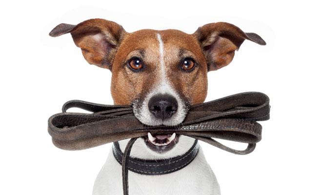 dog-with-leash.jpg
