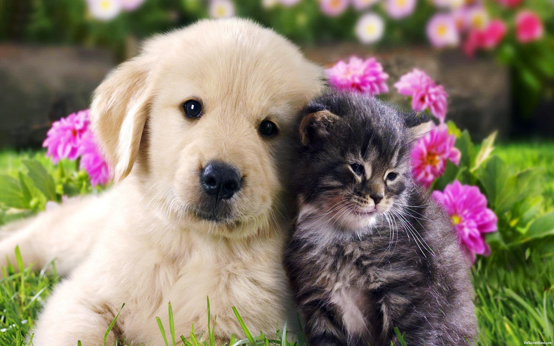 Friendship Day Cat Dog