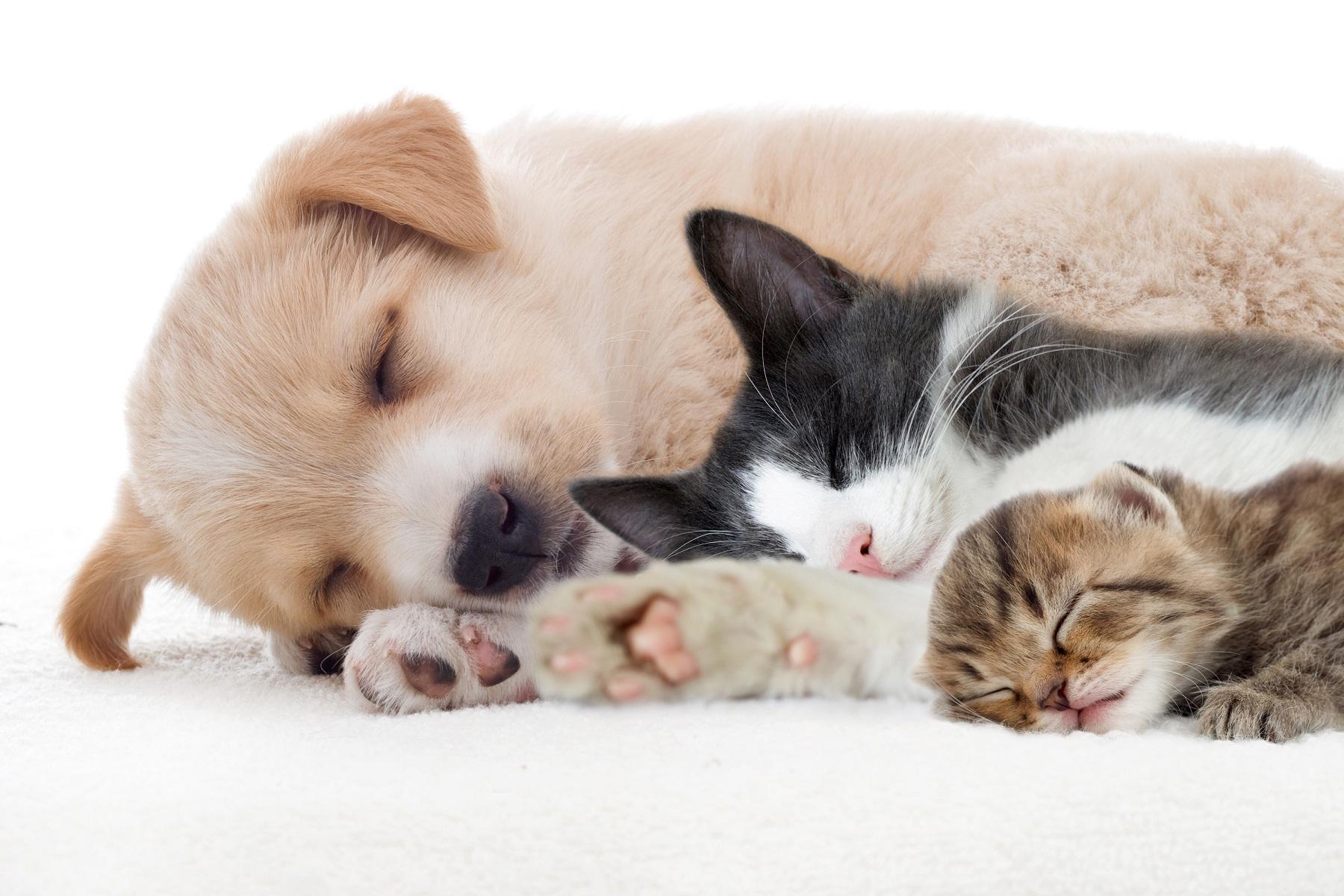 kutya-macska_baratsag_10.jpg
