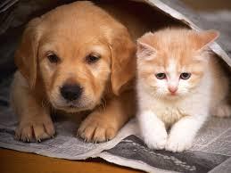 kutya-macska_baratsag_2.jpg