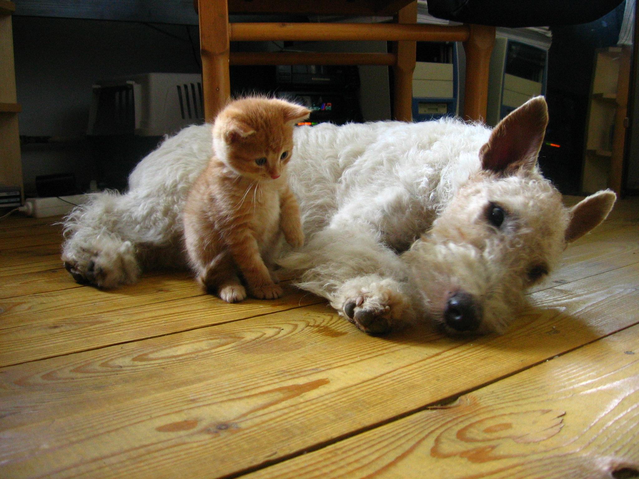 kutya-macska_baratsag_5.jpg