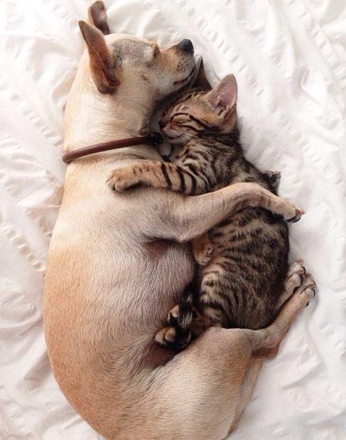 kutya-macska_baratsag_6.jpg