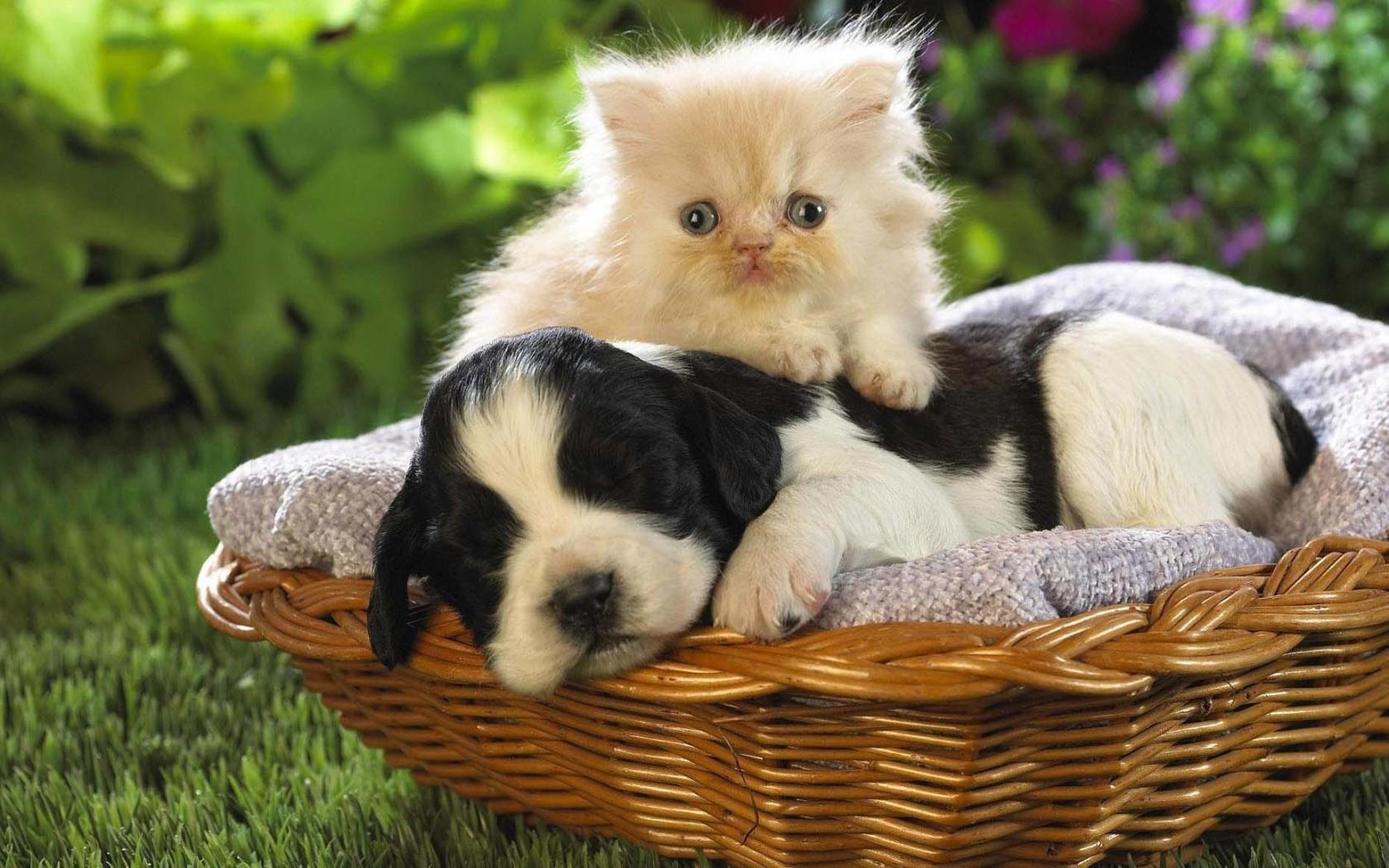 kutya-macska_baratsag_7.jpg