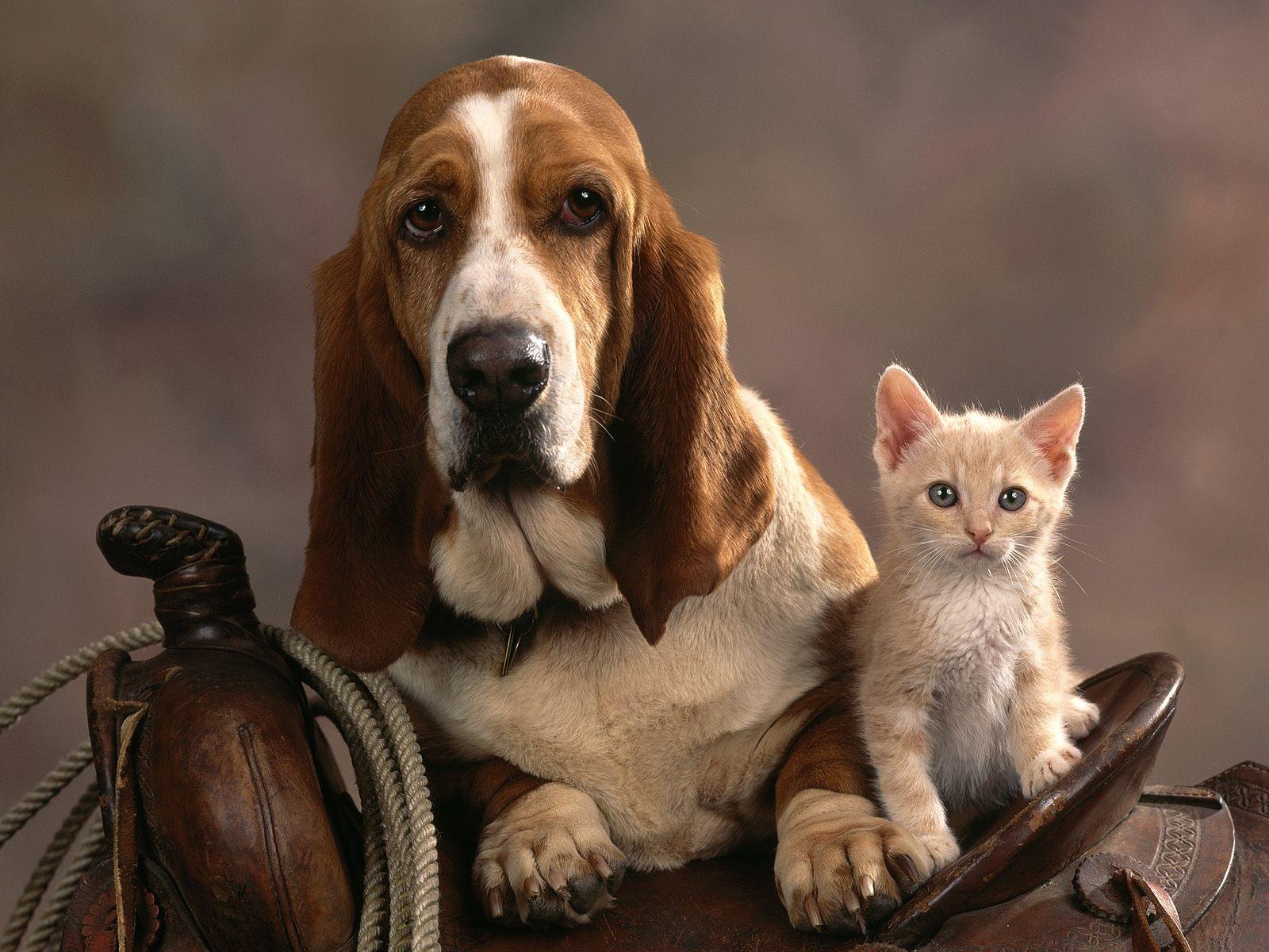 kutya-macska_baratsag_9.jpg