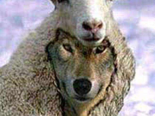 Bárányból farkas, avagy korunk csodája