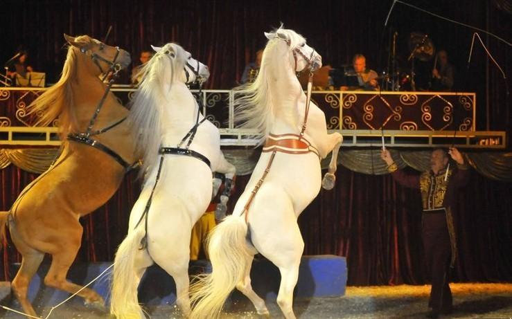 cirkuszi_lovak.jpg