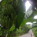 Banán