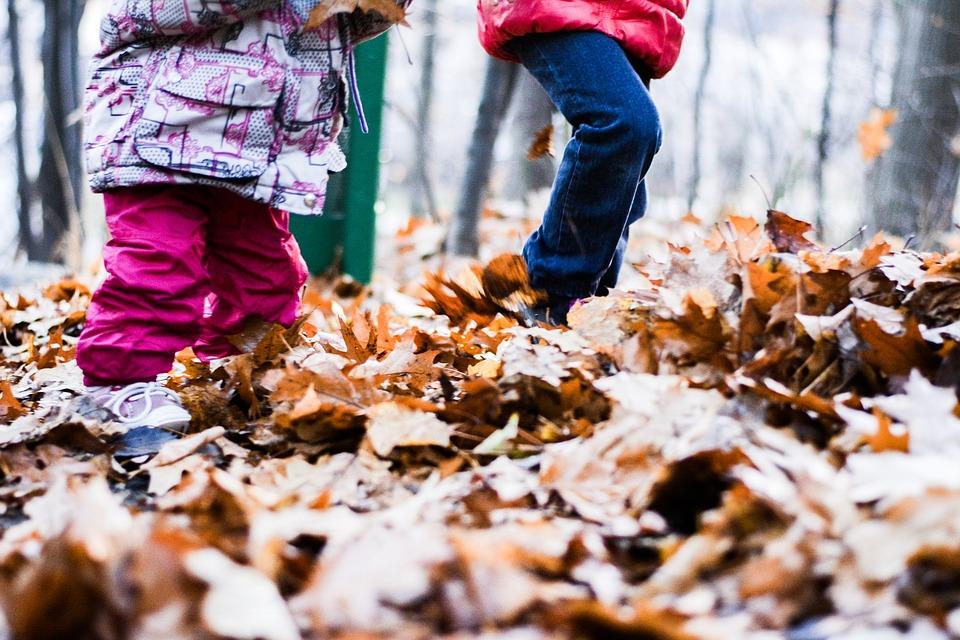 fall-2814904_960_720.jpg