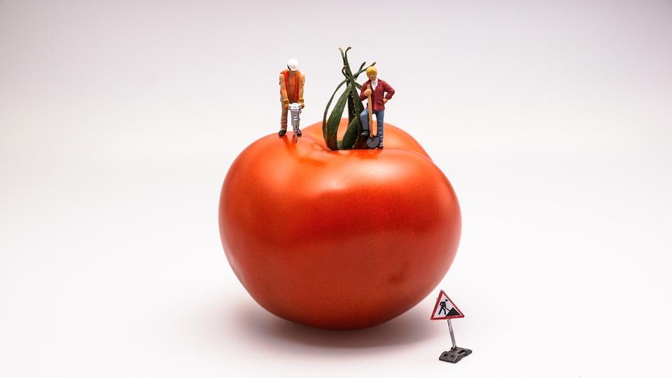 tomato-546989_960_720.jpg
