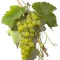 A szőlő jó hatással van a szívre