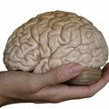 Az agy 10 legtitkosabb rejtélye