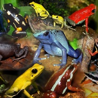 THE world's most poisonous FROGS ARE IN COLOMBIA