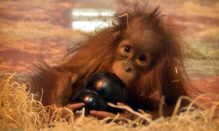 Játékos Állatkert - Így szerezz örömet a kismajomnak!