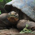 Feljelentették a teknősverésre buzdító Bochkorékat