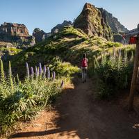 Virágoskert 1800 méter magasan