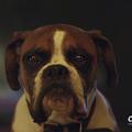 A cuki reklámmal nyitotta meg a karácsonyi szezont a John Lewis idén is