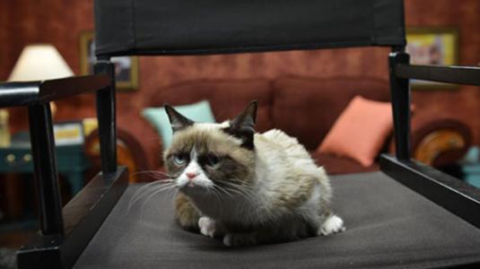 Reklámarc lett a világ legmogorvább macskájából